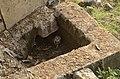 Barn Owl in Vaduvoor Bird Sanctuary JEG7242.JPG