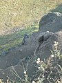 Basalt hill.pic.12..JPG