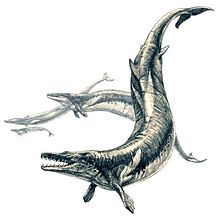 Phanerozoic wikipedia basilosaurus a whale despite the name sciox Choice Image