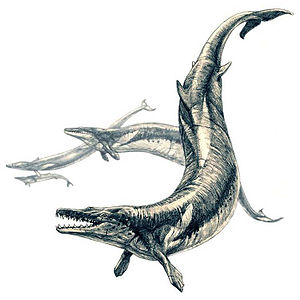 Cenozoic - Basilosaurus