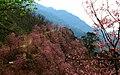 Bear Mountain (熊空附近林場) - panoramio.jpg