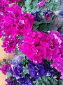 Beautiful Flower In My Garden.jpg