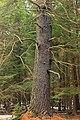 Beaver Dam Trail (6) (13228997155).jpg