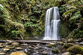 Beech Forest (AU), Great Otway National Park, Beauchamp Falls -- 2019 -- 1271.jpg