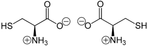 Cysteine - (R)-Cysteine (left) and (S)-Cysteine (right) in zwitterionic form at neutral pH