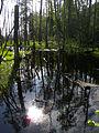 Białowieża National Park, Poland (4664519792).jpg
