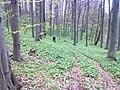 Biciklom,Velika - Jankovac - panoramio (4).jpg