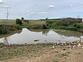 Bief Longeray Prairies Inondables Val Saône St Bénigne 5.jpg
