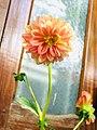 Big flower 1.jpg