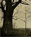 Bird lore (1909) (14569156457).jpg