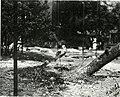Bird notes (1911) (14725516206).jpg