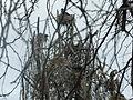 Birds of Lake Naivasha 01.JPG