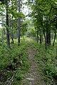 Blakeley Battleground, confederate line (trail).jpg