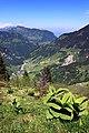 Blick Richtung Fell und Oberrickenbach.jpg