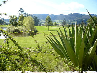 Bogotá savanna