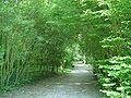 Bois de l'aurore1.jpg
