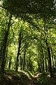 Bois de la Louvière - Livierenbos, Flobecq - Vloesberg 10.jpg