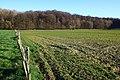 Bois de la Louvière - Livierenbos, Flobecq - Vloesberg 20.jpg