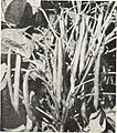 Bolgiano's capitol city seeds - 1960 (1960) (20390474235).jpg