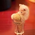 Bonsai kitten.jpg