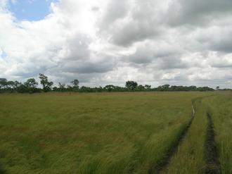 Bougouriba Province - Bontioli Reserve