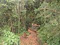 Bosque del Adelantado 1.JPG
