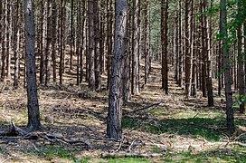 Brüggen, Brachter Wald, 2020-06 CN-04.jpg