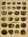 Brachiopod genera of the suborders Orthoidea and Pentameroidea (1932) (19786585593).jpg