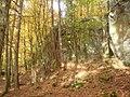 Brandbuesch, Ferschweiler Plateau - geo.hlipp.de - 15177.jpg