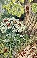 Brehms Tierleben. Allgemeine kunde des Tierreichs (1911-19-) (20386765596).jpg