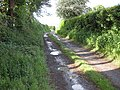 Bridleway, Bickington - geograph.org.uk - 1321175.jpg