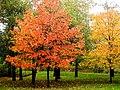 Bright Trees (1503862605).jpg