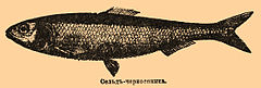 Brockhaus and Efron Encyclopedic Dictionary b57 371-0.jpg