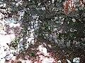 Burgstall Stein 06, Donautal.JPG