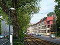 Buschallee Weißensee 110511 AMA fec (3).JPG