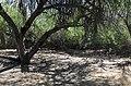Butcher Jones Trail, Burro Cove and Beyond, Tonto National Park, Arizona - panoramio (25).jpg