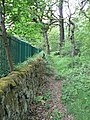 By the railway embankment, Backhouse Wood - geograph.org.uk - 821888.jpg