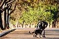 Cães da Polícia Militar são treinados para reforçar segurança na Olimpíada (28189842842).jpg
