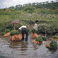 COLLECTIE TROPENMUSEUM Het wassen van bossen wortelen in de rivier TMnr 20018436.jpg