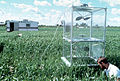 CSIRO ScienceImage 534 Measuring Gas Emissions and Absorption From Wheat.jpg