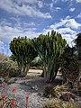 Cactus II.jpg