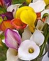 Calla Lilies (19537386165).jpg
