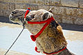 CamelHead 9454.jpg