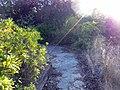 Camino - panoramio (5).jpg