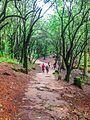 Camino boscoso hacia las ermitas.jpg
