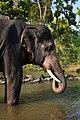 Camp Elephant Front Standing River Mudumalai Mar21 A7C 00404.jpg