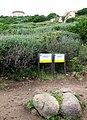 Campomoro tour génoise 2.jpg