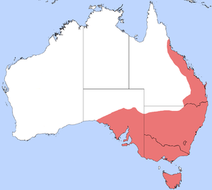 Map of Australia showing the distributional range of the banded sugar ant