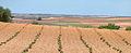 Campos de El Toboso (DavidDaguerro).jpg