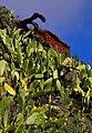 Canary Islands 2018-02-11 (26631076208).jpg